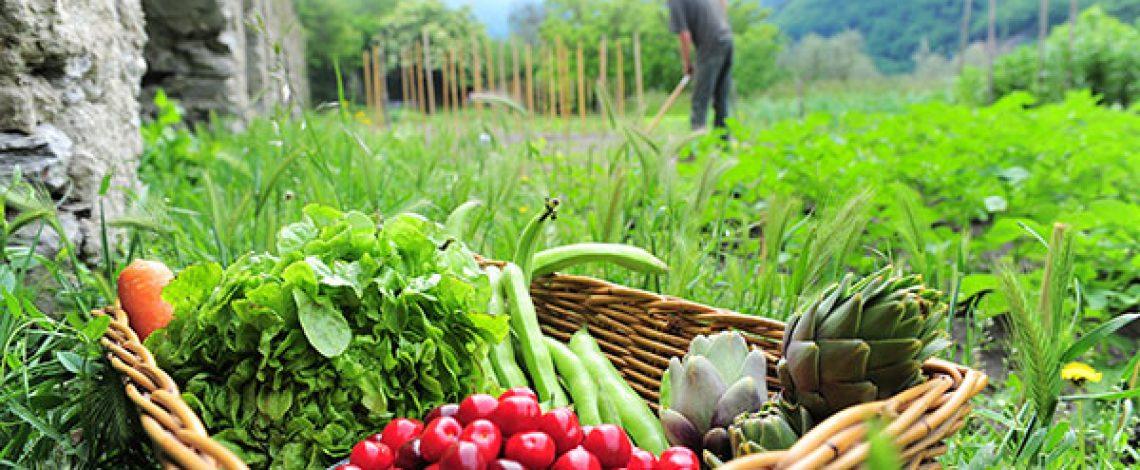 Manual de Agricultura Orgánica para descargar en PDF – Territorio Ancestral